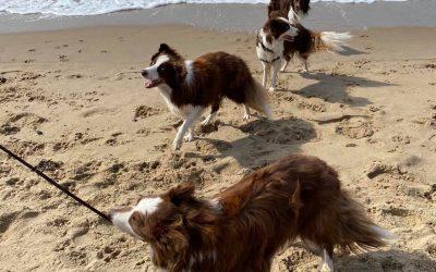Strand dagje
